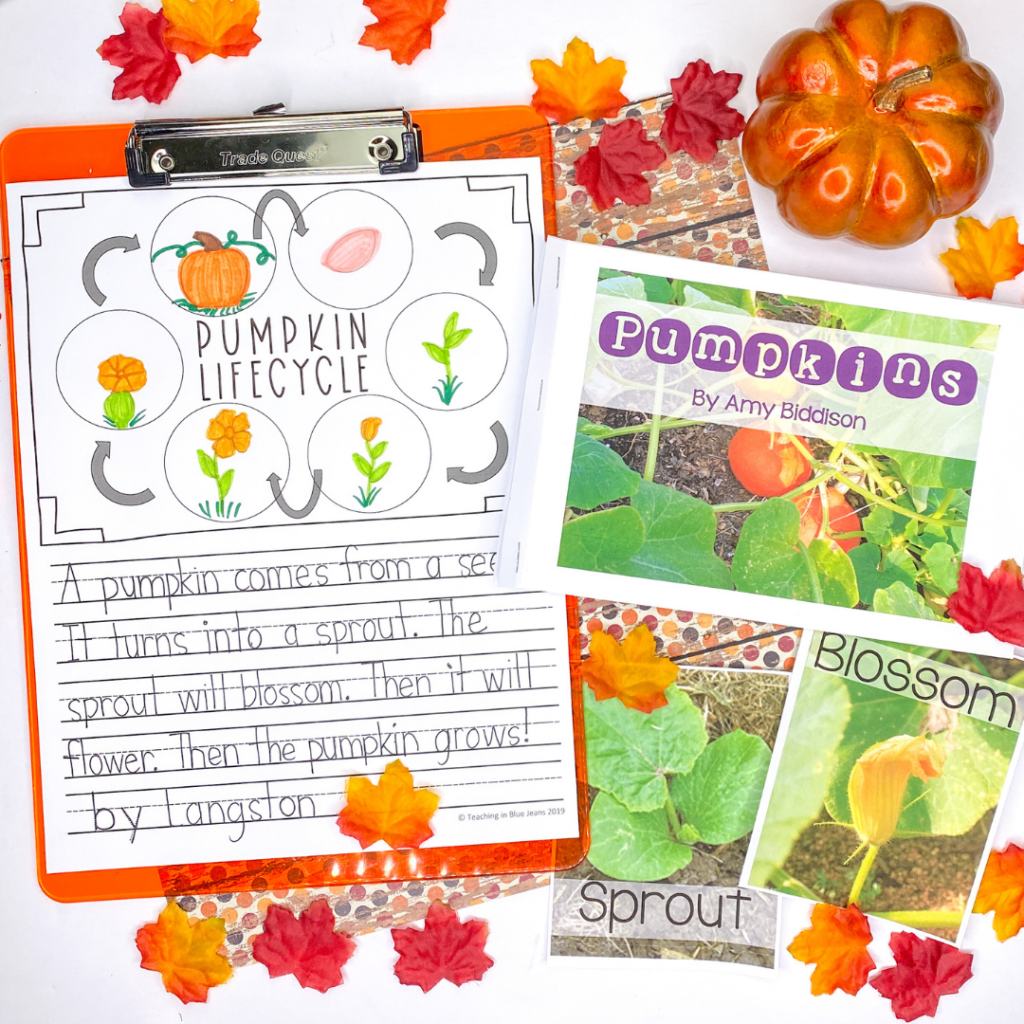 pumpkin vocabulary cards, emergent reader and writing activities in one bundle pack