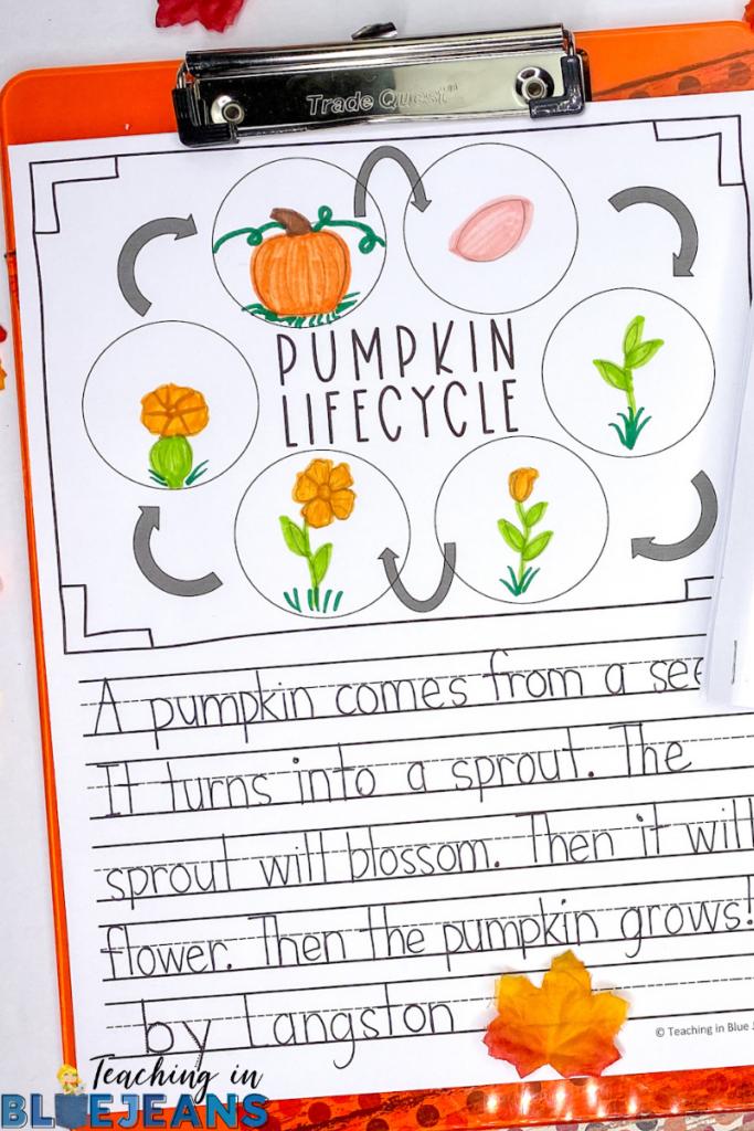 pumpkin life cycle writing activity