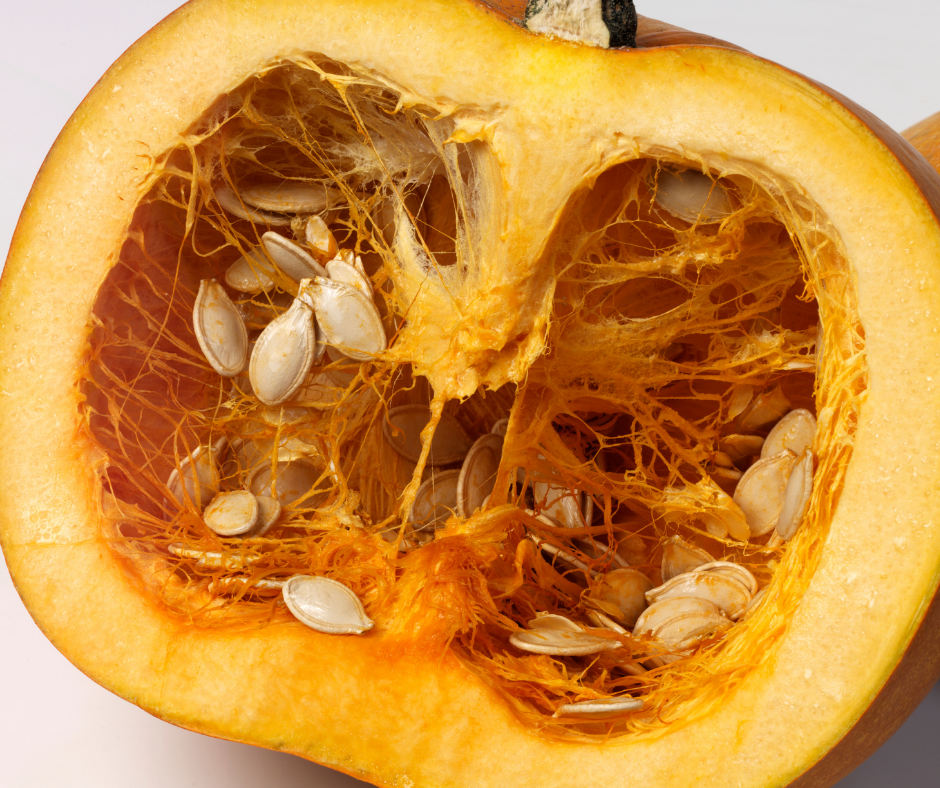 making observations is the first step in pumpkin science